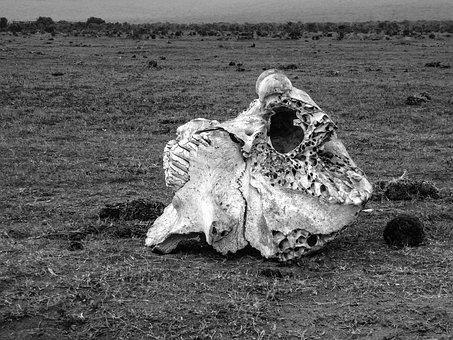 Skull, Bone, Elephant, Skeleton, Skull And Crossbones