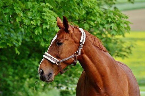 Horses, Coupling, Stallion, Eat, Paddock, Brown, Meadow