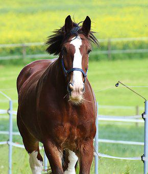 Horse Paddock, Stallion, Eat, Paddock, Brown, Meadow