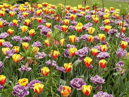 Tulips, Park Garden Sigurtà, Valeggio Sul Mincio