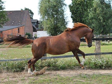Horse, Warmblut, Paddock, Western Riding, Ride