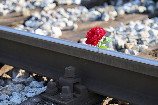 Red Rose On Rail Track, Railway, Accident