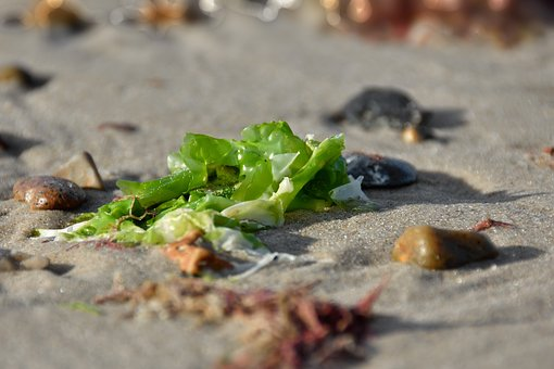 Algae, North Sea, Beach, Nature, Sand, Stones