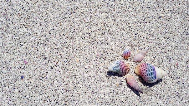 Shell, Seashell, Beach, Tropical, Nature, Aquatic