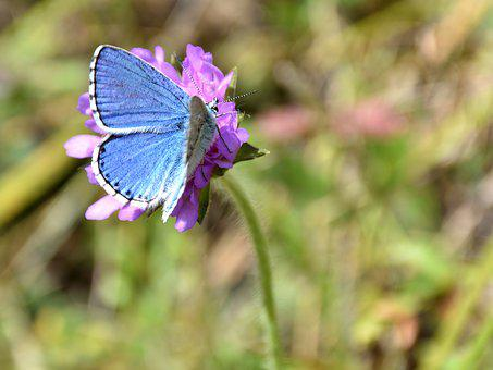 Butterfly, Flower, Common Blue, Nature, Public Record