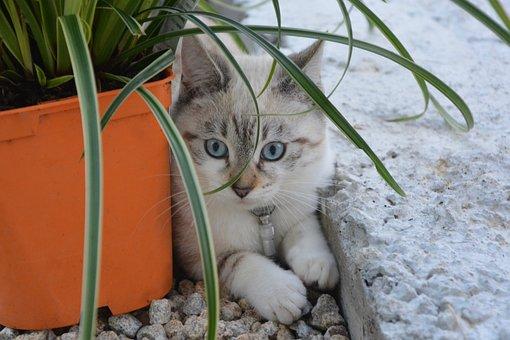 Kitten, Cat, Female, Young Cat, Domestic Animal, Feline