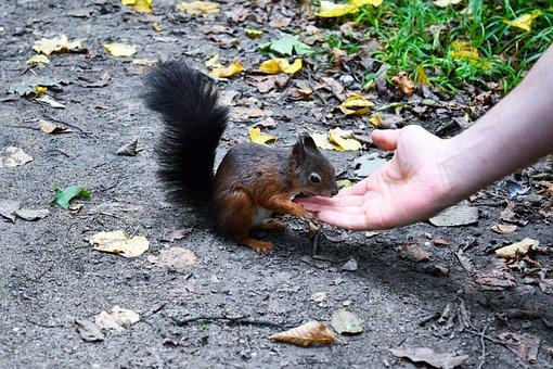Squirrel, Autumn, Croissant, Cute, Leaves, Rodent