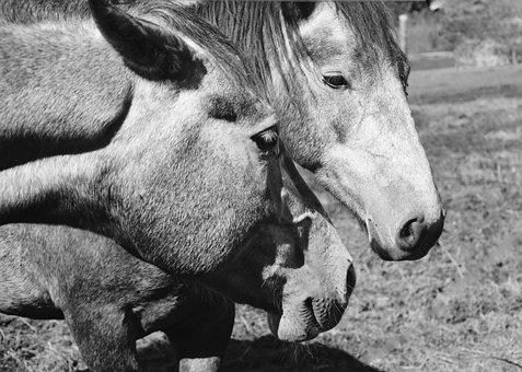 Horses, Head Horse, Portrait Profile, Nostrils, Eye