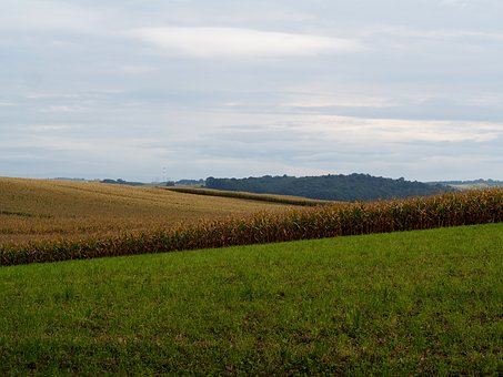 Nature, Fields, Agriculture, Hilly, Arable, Field