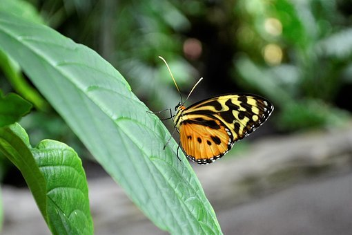 Monarch Butterfly, Insect, Bug, Flower, Nature, Natural