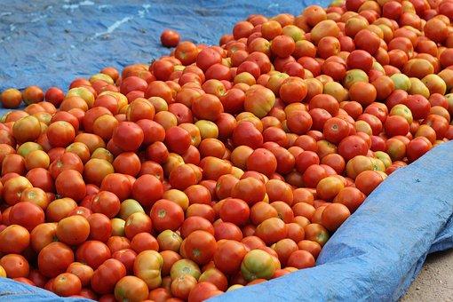 India, Street Market, Tomatoes, Hyderabad, Kondapur