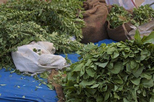 Kari Leaves, India, Street Market, Hyderabad, Kondapur