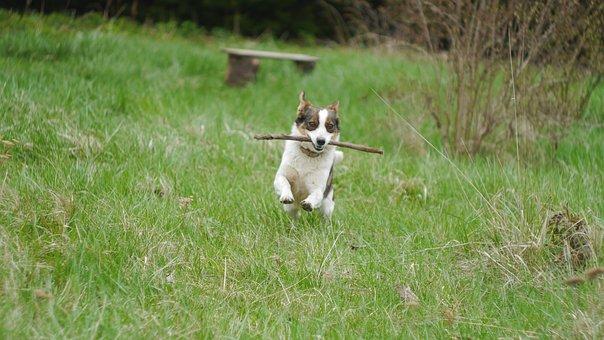 Dog, Garden, Lawn, Grass, Pet, Poland, Doggy
