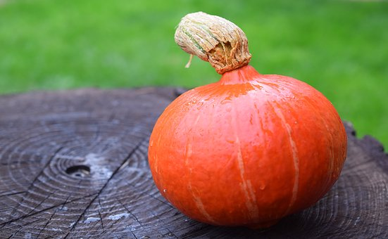 Pumpkin, Autumn, Halloween, Orange, Gourd, Harvest