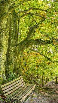 Bank, Autumn, Mood, Romantic, Idyll, Idyllic, Leaves