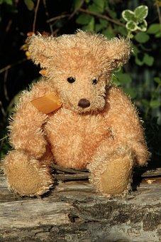Teddy, Teddy Bear, Plush, Bear, Bears, Soft Toy