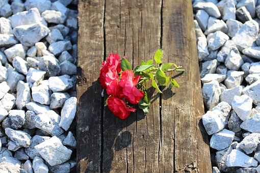 Red Roses On Railway, Train Accident, Tragedy