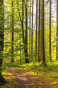 Forest, Away, Hiking, Nature, Trees, Forest Path, Trail